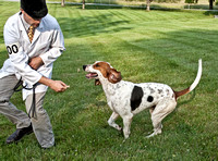 20 - Champion Registered Penn-Marydel Foxhound