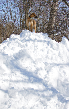 08 - I'll stand on my new snow fort and look for deer