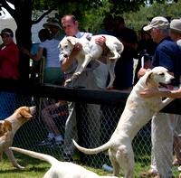 2 - Puppy Show (with the Blue Ridge Hunt) (5/26/2008)