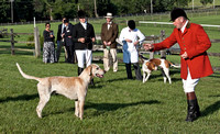 BM12-10 - Champion English Foxhound