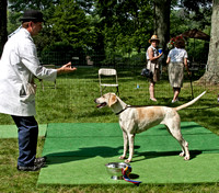 VF11-239 - Winner, Champion English Foxhound