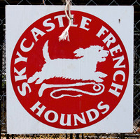 04 - Skycastle French Hounds