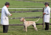 BM11-766 - Champion English Foxhound