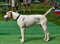 VF11-235 - Winner, Best English Hound - Unentered