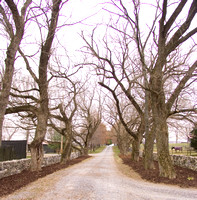 01 - The avenue at Caveland Farm