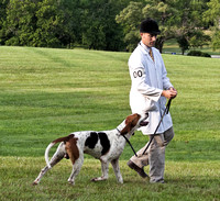 17 - Champion Registered Penn-Marydel Foxhound