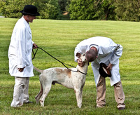 07 - Champion English Foxhound, Grand Champion