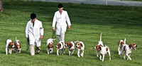 03 - Winner, 5-Couple of American Hounds