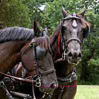 7/28/2012 - Carriage Ride