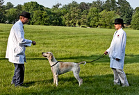 10 - Champion English Foxhound - Live Oak Fable