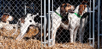 05 - Hounds in kennels