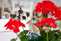 03 - Rabbits lurking in the geraniums