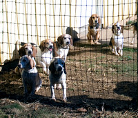 04 - Expectant hounds