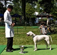 Winner, Best English Foxhound (unentered)