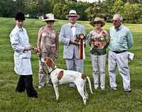 12 - Champion American Foxhound, Reserve Grand Champion