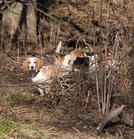 The Wolver Beagles