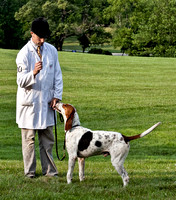 18 - Champion Registered Penn-Marydel Foxhound