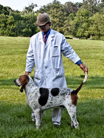07 - Champion Penn-Marydel Foxhound - Red Mountain Mojo