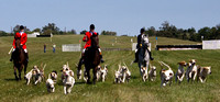 15 - Hound exhibition by the Blue Ridge Hunt