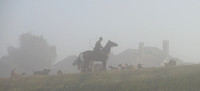 Hunt staff and hounds materialize in the mist, Millwood, Virginia