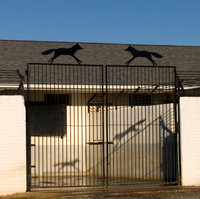 Foxes and shadows at the kennel gates, Boyce, Virginia
