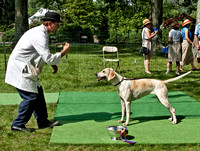 09 - Champion English Foxhound - Live Oak Fable