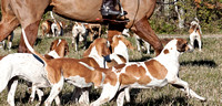 13 - Hounds' eye view of their buddies