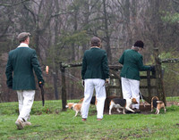 18 - Wolver Beagles entering the holding pen