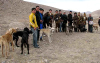 8 - Dogs and eagles at hunting show in Kyrghizstan