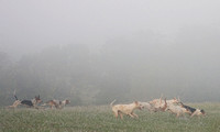 Hounds running through the mist, Millwood, Virginia