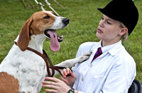 13 - Champion American Foxhound, Reserve Grand Champion