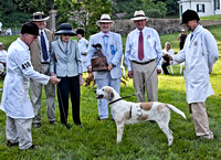 03 - Performance Hound - Midland Tactful