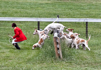 20 - Winner, 5-Couple of Cross-Bred Foxhounds