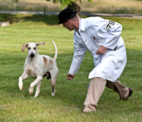 06 - Champion English Foxhound, Grand Champion