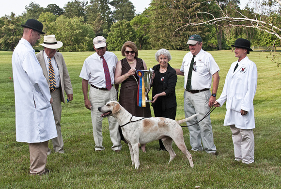 08 - Champion English Foxhound, Grand Champion