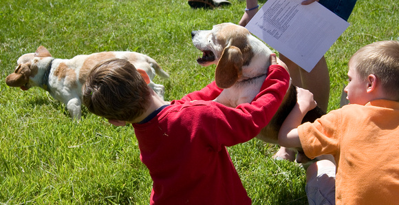 Beagle exhibition, Upperville, Virginia