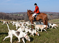 20 - Acres of hounds