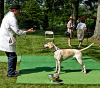 08 - Champion English Foxhound - Live Oak Fable