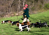 Ashland Bassets at the pack trials
