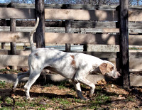 06 - Hound and fence